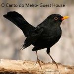 O Canto do Melro Guest House